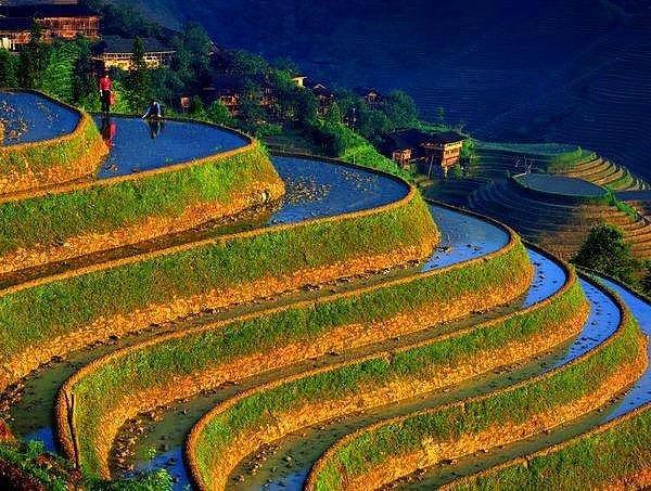 Chinese rice-paddie.jpg