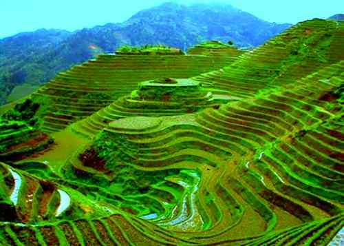 Chinese rice terraces